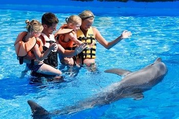 Swim with the Dolphins in Marmaris