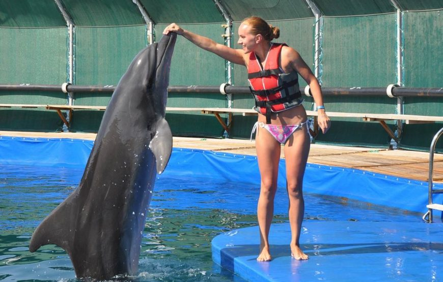 Meet with Dolphins
